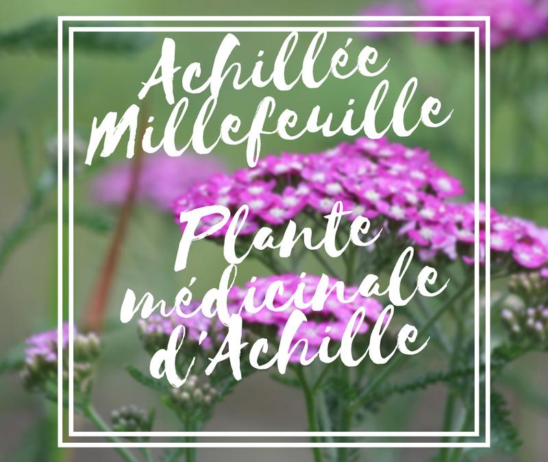L'achillée millefeuille : la plante médicinale d'Achille