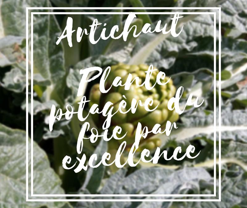 L'artichaut est la plante potagère du foie par excellence