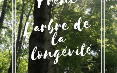 Le frêne : l'arbre de la longévité