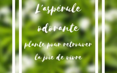 L'aspérule odorante, cette plante pour retrouver la joie de vivre