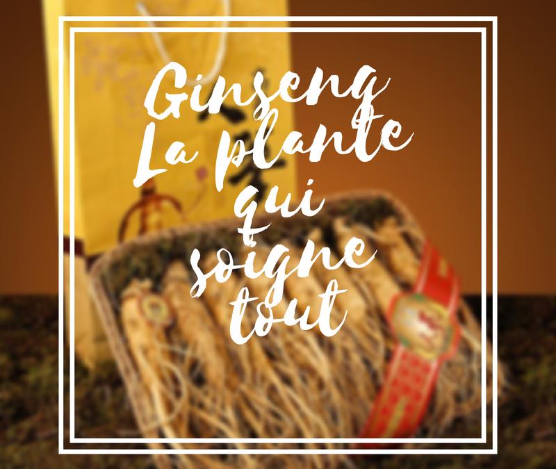 Ginseng : la plante qui soigne tout