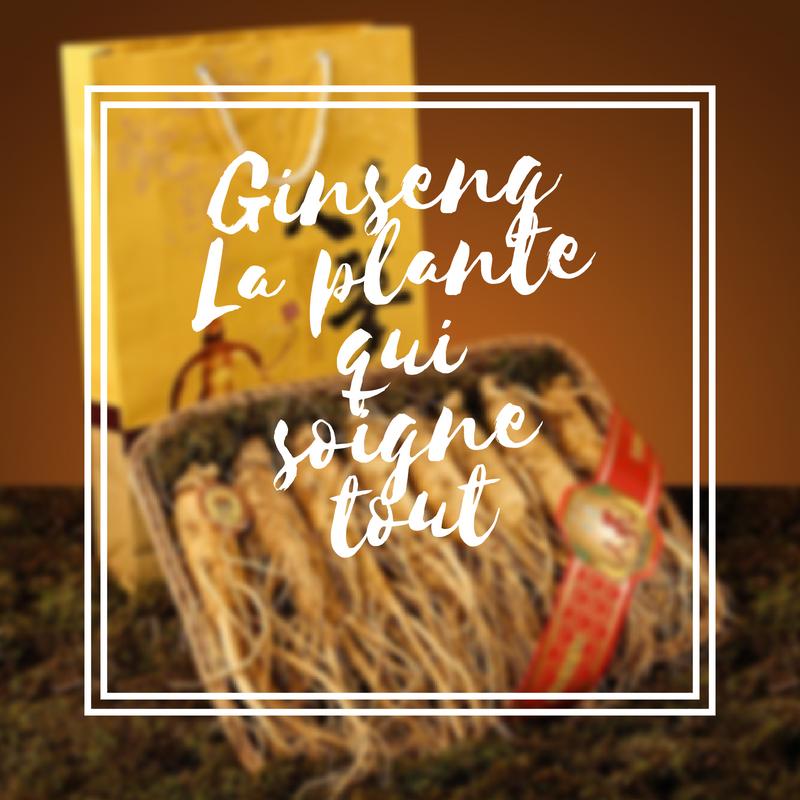 Ginseng la plante qui soigne tout
