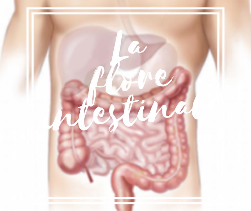 La flore intestinale