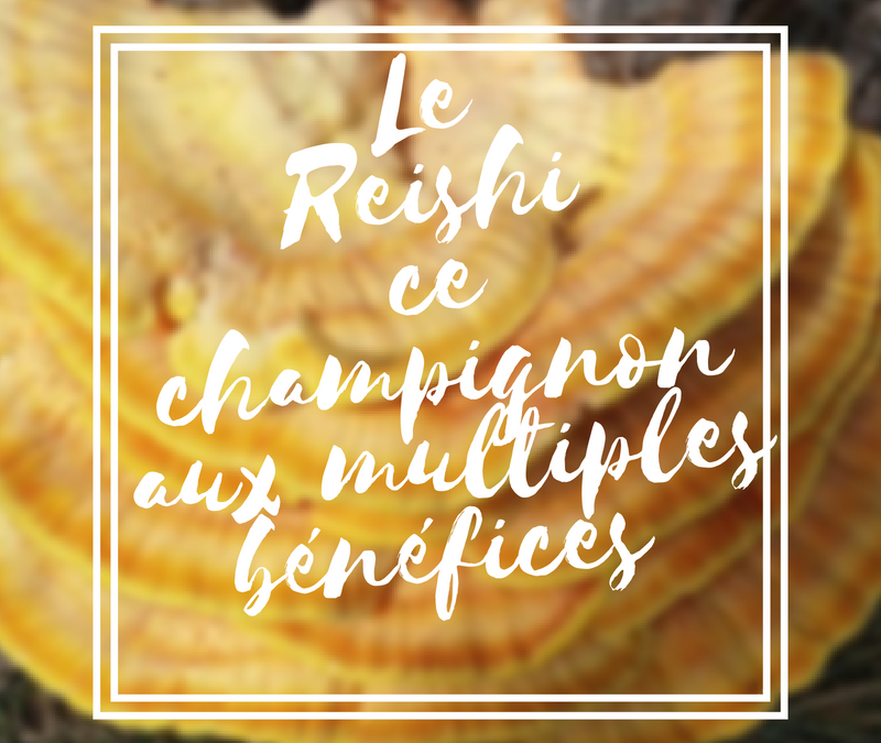 Le reishi : ce champignon aux multiples bénéfices