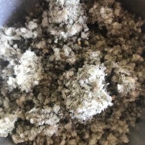 Bouillon blanc Sommités fleuries bio