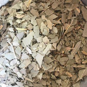 Eucalyptus feuille bio