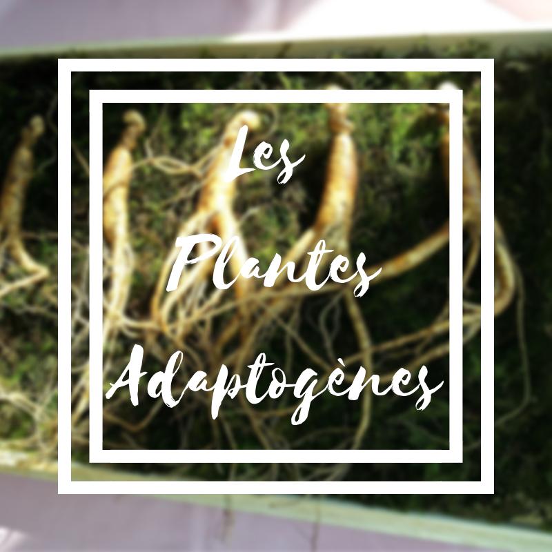 Les plantes adaptogènes qui permettent de lutter contre le stress