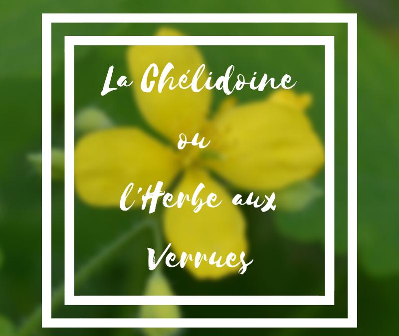 La chelidoine ou l'herbe aux verrues