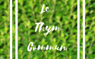 Le thym commun