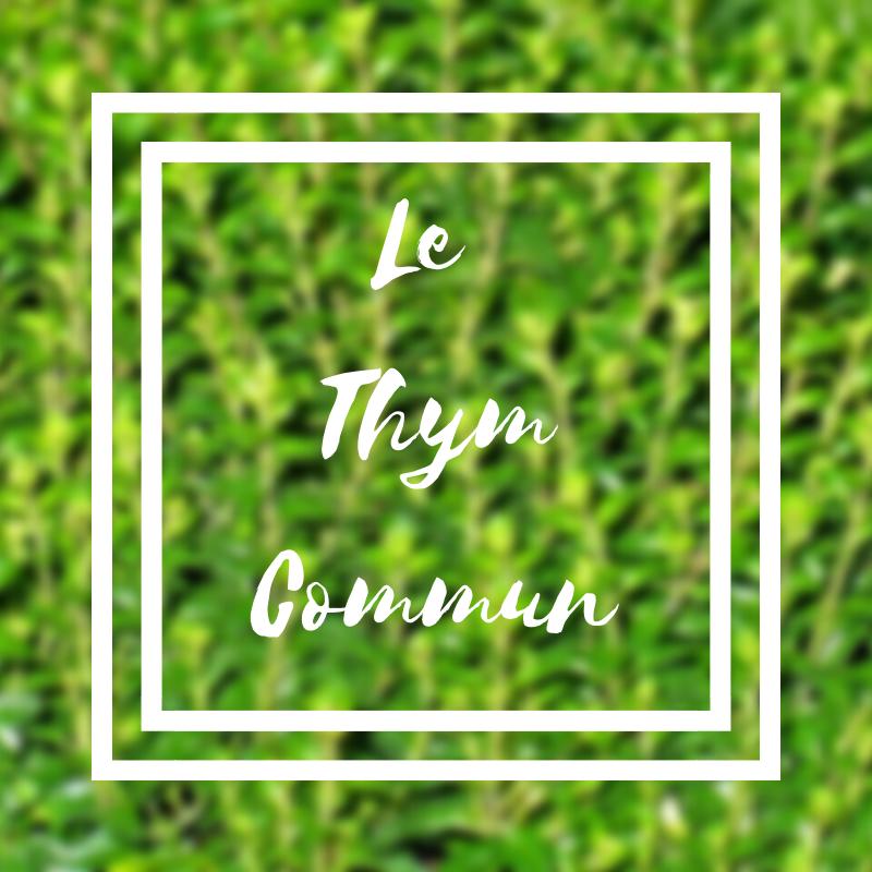 Le thym commun ou thymus vulgaris