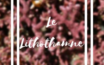 Le Lithothamne