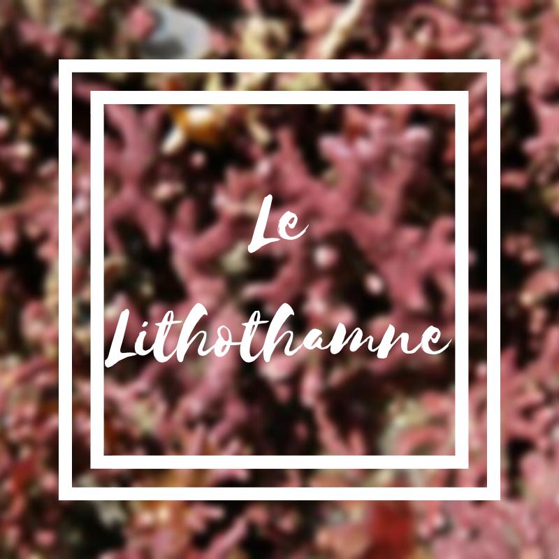Le lithothamne ou cette fabuleuse algue rouge
