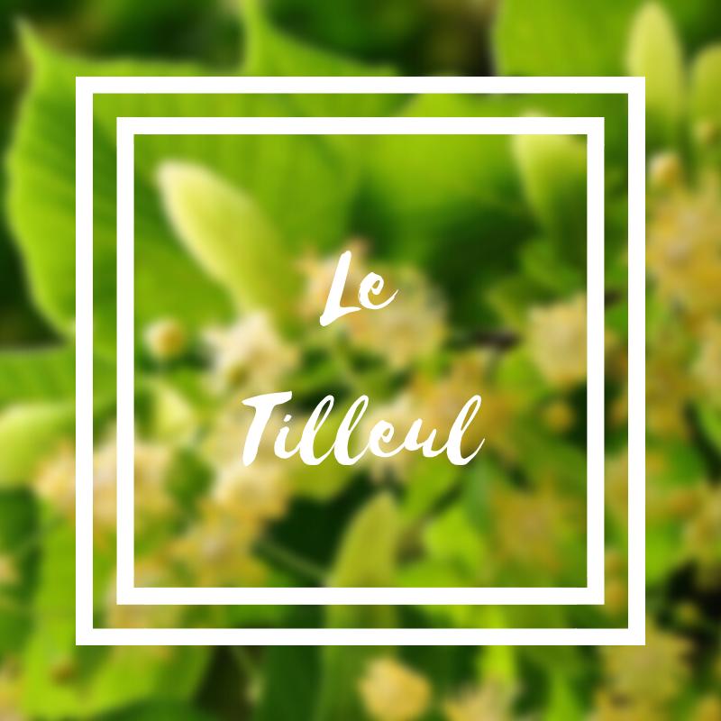 Le tilleul à petites fleurs ou à grandes feuilles