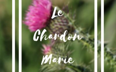 Chardon Marie, cette plante qui protège notre foie