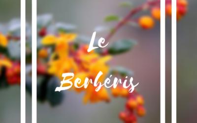 Le Berbéris