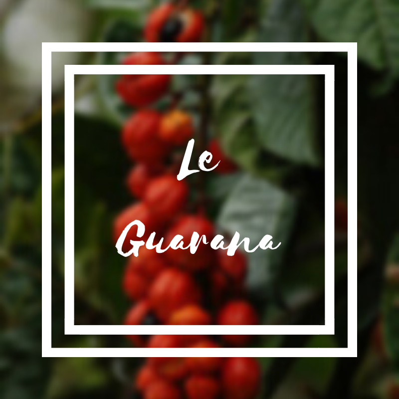 Le guarana ou warana
