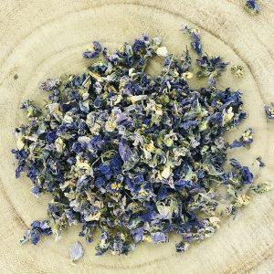 Violette fleur bio
